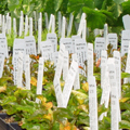 Synthetic Paper for Waterproof Plant Stake Tags