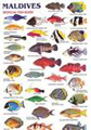 Synthetic Paper for Waterproof Fish ID Charts