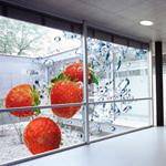 window-displays-1
